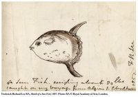 Sunfish from Lee's travels