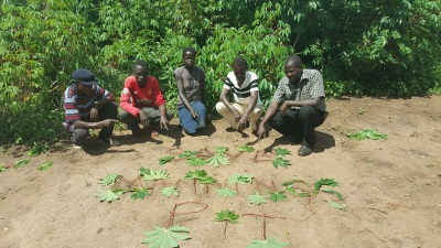 Message in cassava leaves from Uganda